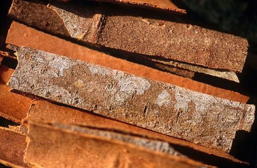 Stock Photo: 1436R-256794 Indian cinnamon. Gujarat, India