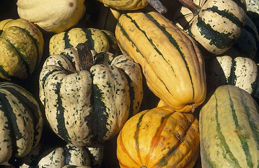 Pile of assorted harvested squashes for sale : Stock Photo