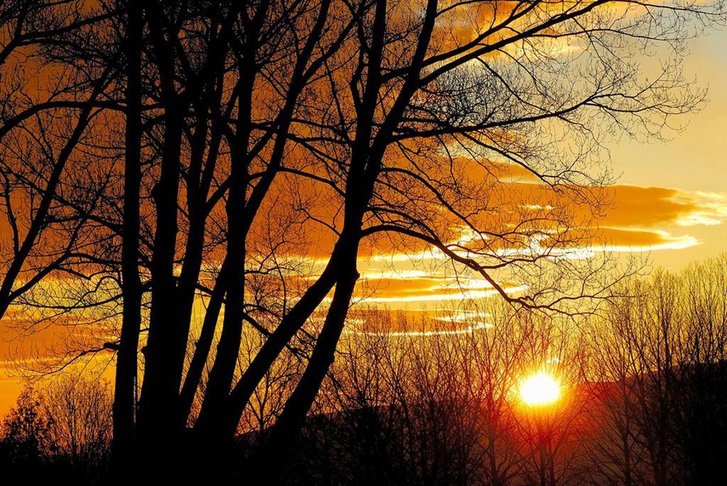 Poplars at sunset. Osseja, Pyrénées-Orientales, France : Stock Photo