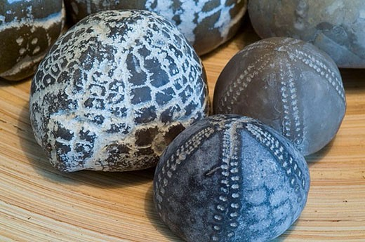 Collection of echinites (fossil Sea Urchins). Juetland, North Europe : Stock Photo