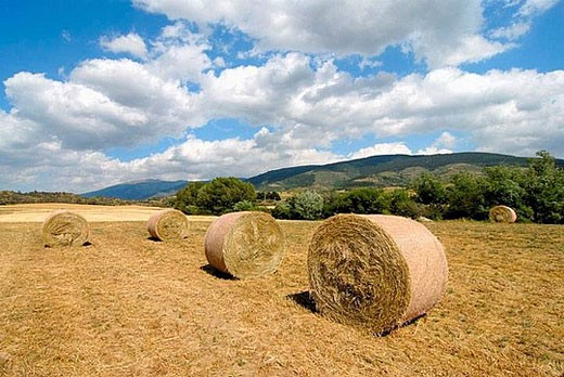 Stock Photo: 1436R-280234 Straw rolls. Osseja, Pyrénées-Orientales, France