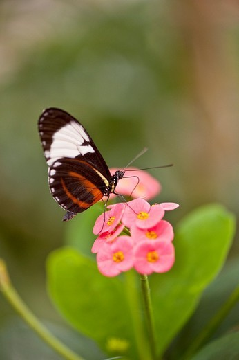 Stock Photo: 1436R-298833 A close up view of a beautiful butterfly