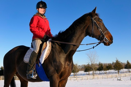 Young female rider in red jacket on horseback standing in a winter field against a blue sky : Stock Photo