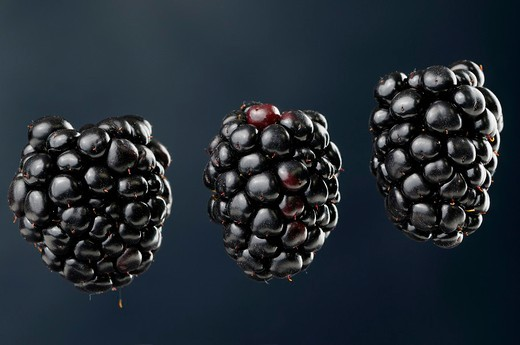 Three suspended blackberries an aggregate fruit named Rubus fruticosus on a blue background : Stock Photo