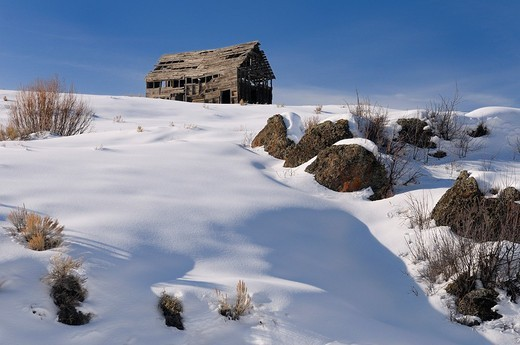 Abandoned dilapidated barn on hill at Bitch Creek Idaho in winter : Stock Photo