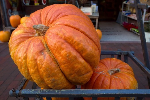 Pumpkins for Sale, Lewes, England : Stock Photo