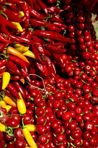 Capsicum annuum or chili peppers drying to make Hungarian paprika - Kalocsa Hungary : Stock Photo