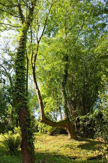 Tree's trunk with grove close to Igara road, Donostia-San Sebastian, Guipuzcoa, Basque Country, Spain : Stock Photo