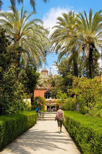 Stock Photo: 1436R-309681 Gardens of the Alcazar, Reales Alcazares, Seville, Andalusia, Spain