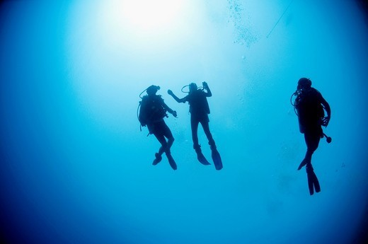 Stock Photo: 1436R-310561 Cuba divers in the water photographed at Ras Mohammed National Park, Red Sea, Sinai, Egypt,