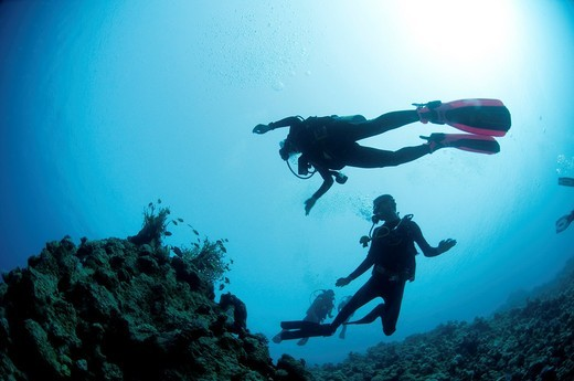 Cuba divers in the water photographed at Ras Mohammed National Park, Red Sea, Sinai, Egypt, : Stock Photo