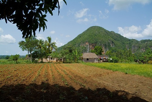 Stock Photo: 1436R-311681 Freshly ploughed field with a farmhouse and Mogote hill in the background, Vinales Valley, Cuba.