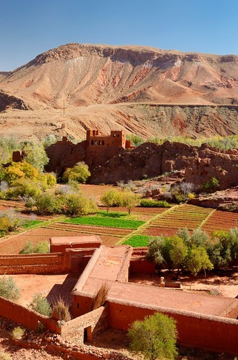 Red soil of Kasbah ruins and cultivated fields in Dades Gorge Morocco : Stock Photo