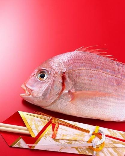 Uncooked red sea bream : Stock Photo