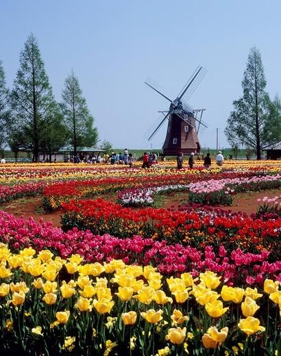 Akebonoyama Agricultural Park, Kashiwa, Chiba, Japan : Stock Photo