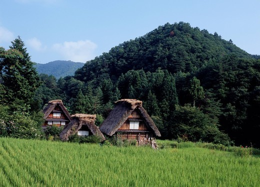 Stock Photo: 1436R-338184 Shirakawago, Shirakawa, Gifu, Japan