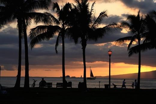 Evening Glow And Silhouette Of Palm Tree, Honolulu, Hawaii, U.S.A. : Stock Photo