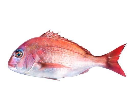 Red sea bream : Stock Photo