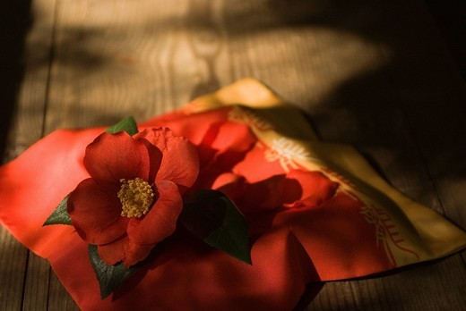 Crape wrapper and camellia : Stock Photo