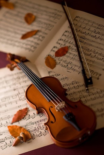 Stock Photo: 1436R-348055 Violin and Acorn