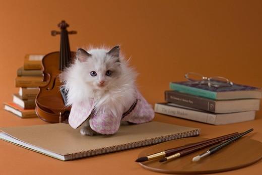 Stock Photo: 1436R-348397 Rag Doll Kitten and Art