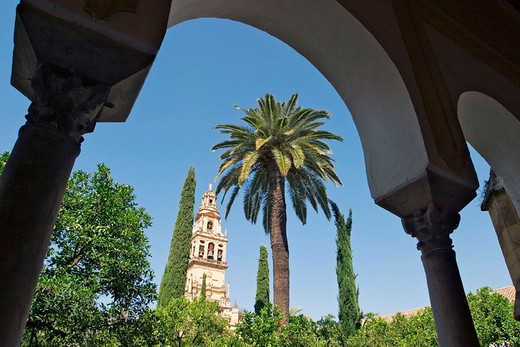Minaret tower of the Great Mosque from Patio de los Naranjos. Cordoba. Andalusia, Spain : Stock Photo
