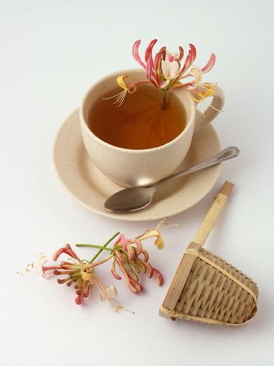 Honeysuckle infusion : Stock Photo