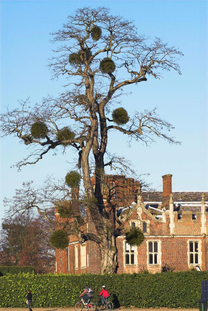Stock Photo: 1436R-352738 England, London, Surrey, Hampton Court seen from across river Thames