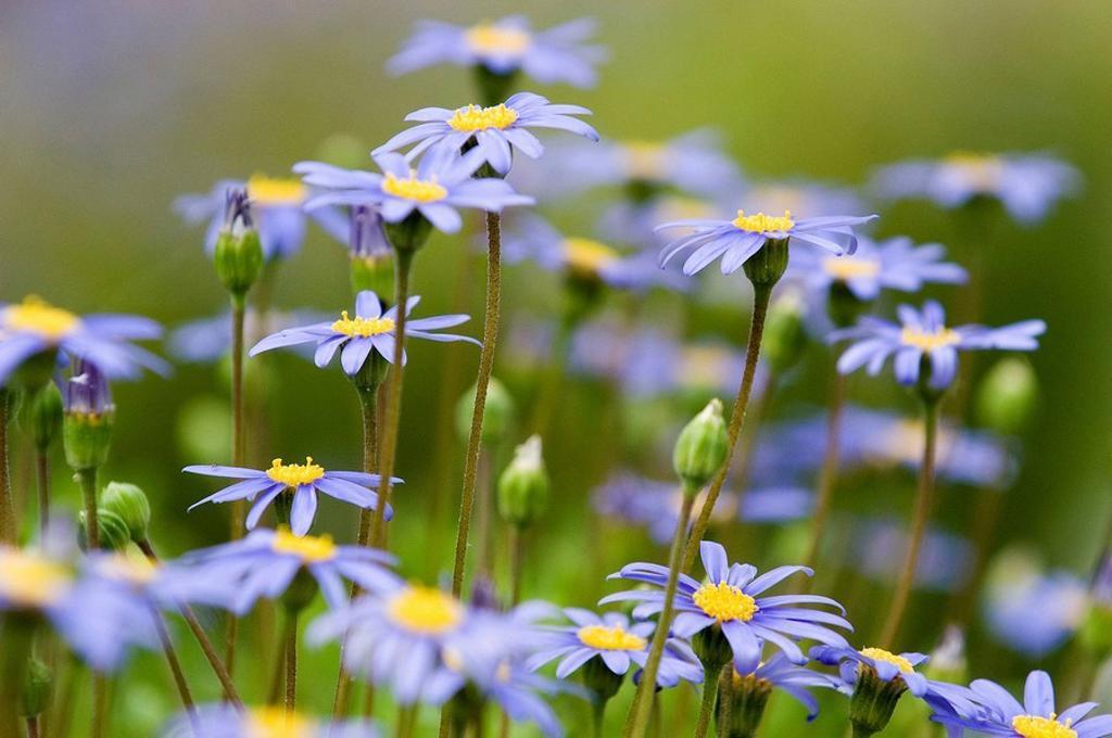 Flower field : Stock Photo