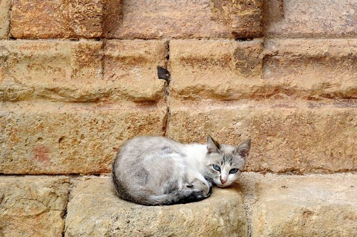 Stock Photo: 1436R-358380 Stray cat. Molinos.Teruel. Aragón. Spain.