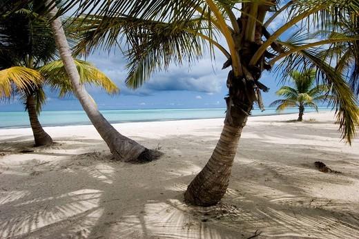 Stock Photo: 1436R-360817 Punta Cana, Juanillo Beach, Dominican Republic