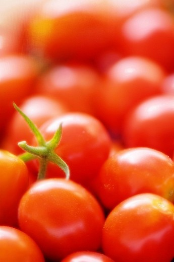 Cherry Tomatoes Growing in the Garden. Solanum lycopersicon. August 2007, Maryland, USA : Stock Photo