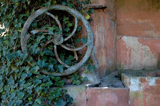 Stock Photo: 1436R-426558 Iron wheel from an old well covered in ivy against an ochre wall, Provence, France