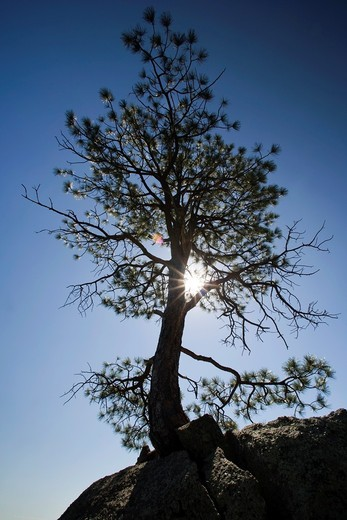 Tree on Rock - Cheyenne Mountain State Park - Colorado Springs, Colorado USA : Stock Photo