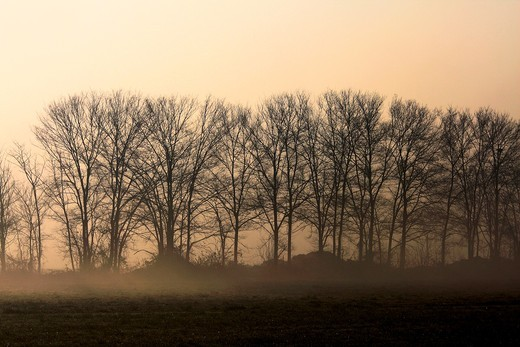 A cold winter morning, a faint sun behind the fog  Parco delle cave, Milan, Italy : Stock Photo