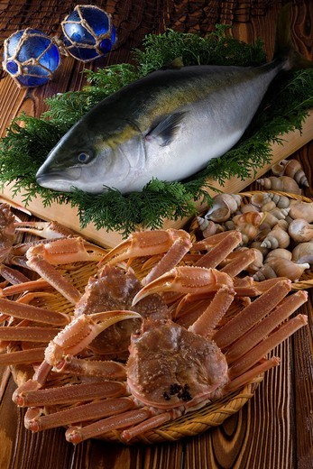 Seafood of Toyama bay : Stock Photo
