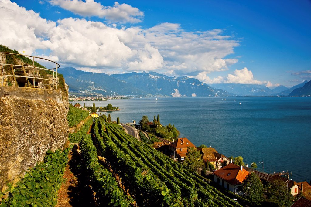 Stock Photo: 1436R-432467 View of Lavaux and Lake Leman  Lavaux is part of a World Heritage Site and is a wine production area with terraces formed since the time of the Romans  Lake Geneva is located on the border between Switzerland and France
