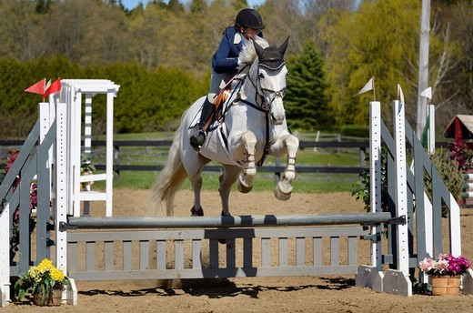 Stock Photo: 1436R-434046 Teenage girl on Gray horse clearing a jump at an outdoor equestrian show competition
