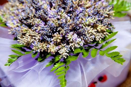 Stock Photo: 1436R-434098 Lavender