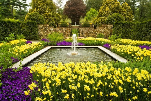 Stock Photo: 1436R-435190 Longwood Garden, Kennett Square, Chester County, Pennsylvania, plants, flowers, flowering bulbs, yellow daffidils, flower bed