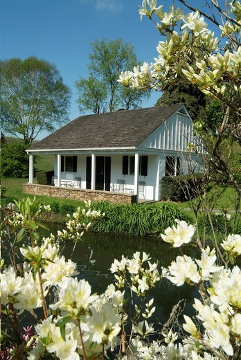 Stock Photo: 1436R-435916 Whitewing Farm Bed and Breakfast, Chester County, Kennett Square, Pennsylvania, white wooden cottage with azalea flowers.
