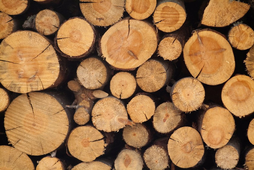 stacked firewood, logs of wood for heating : Stock Photo