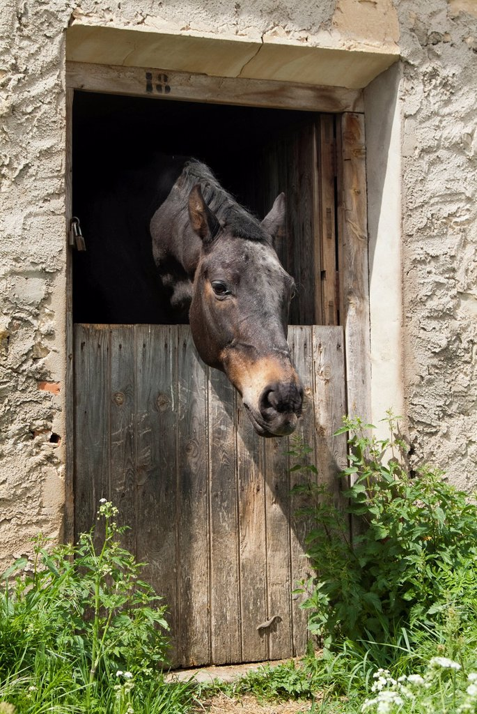 Stock Photo: 1436R-437865 Horse, Guadalaviar, Teruel, Spain
