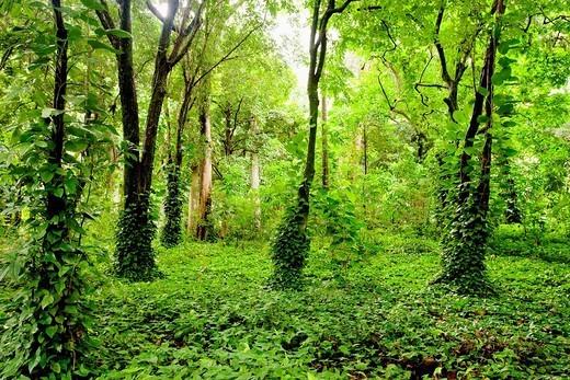The Parque Lage, located between Lagoa & Jardim Botanico, Rio de Janiero, Brazil : Stock Photo