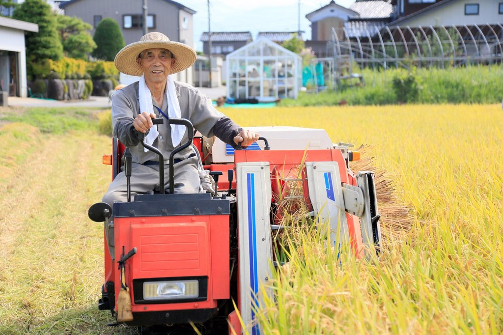 Stock Photo: 1436R-444003 Farmer Harvesting Rice with Combine