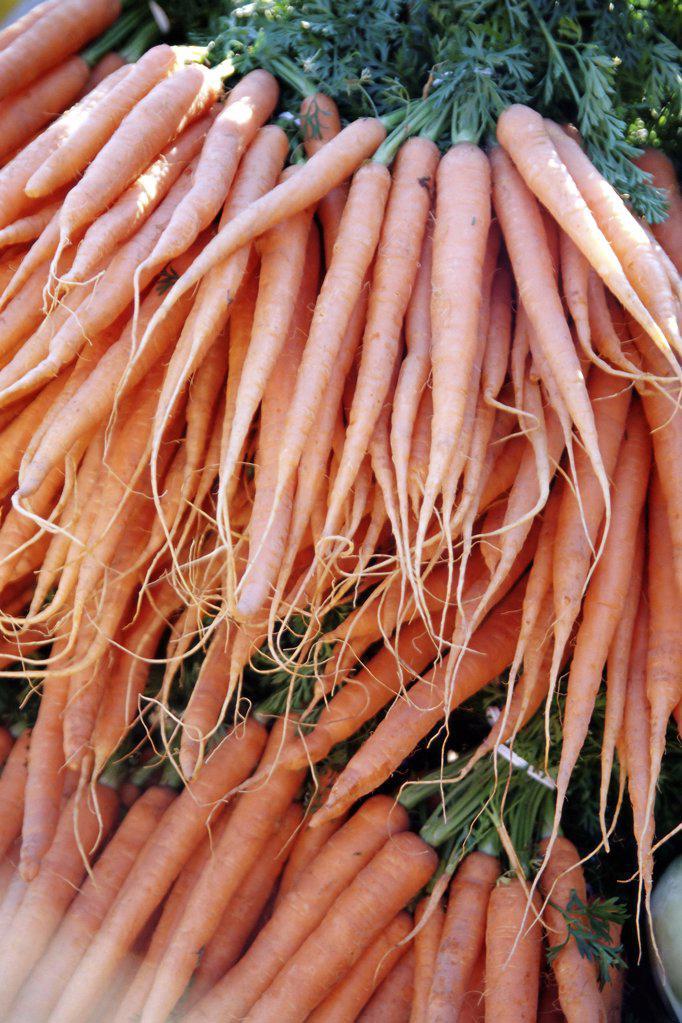 Stock Photo: 1439R-03661 Fresh carrots