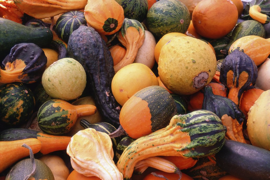 Stock Photo: 1439R-03683 Rotting fruit and vegetables