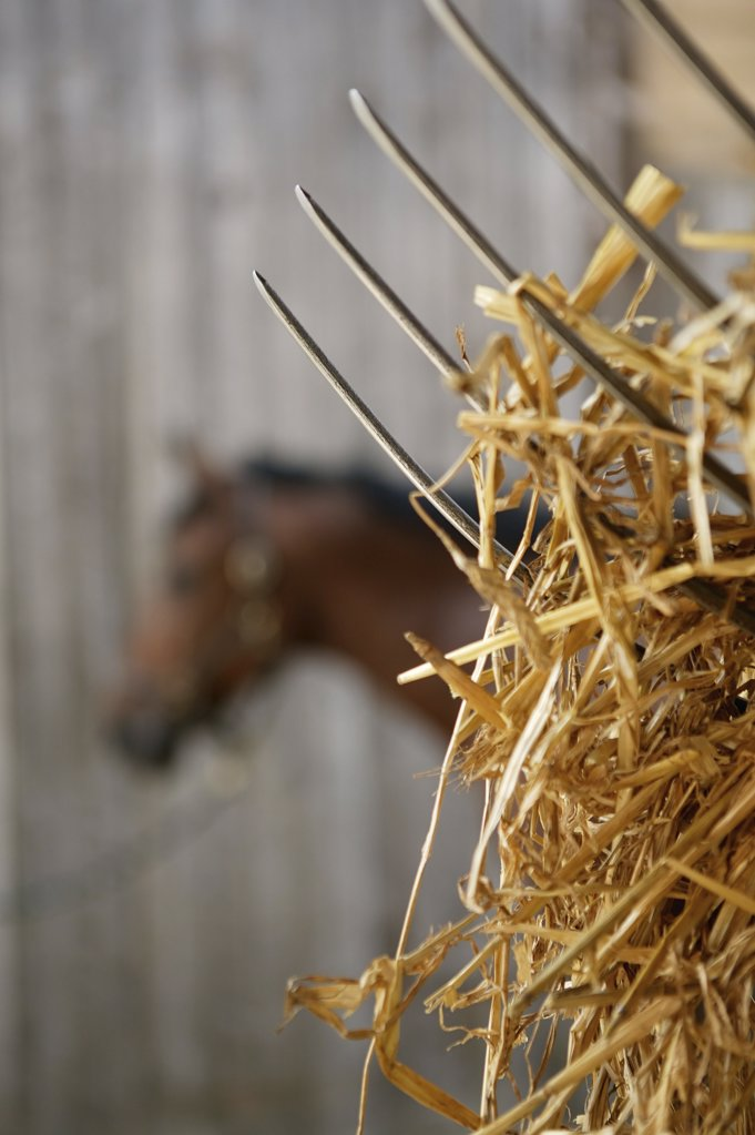 Hay on a pitchfork in front of a horse : Stock Photo