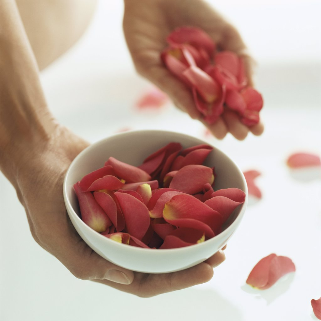 Woman holding rose petals : Stock Photo