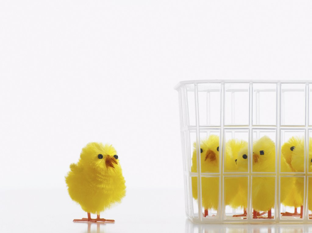 Chick separated from others in basket : Stock Photo